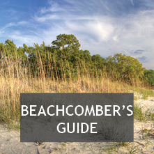Beachcomber's Guide