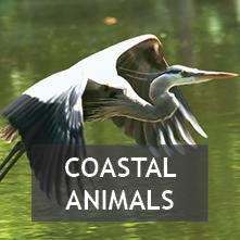 Coastal Animals
