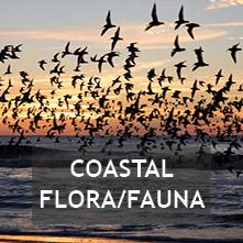 Coastal Flora/Fauna