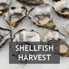 Recreational Shellfish Harvest