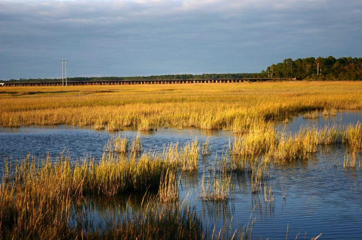 Image of marshes in Glynn county