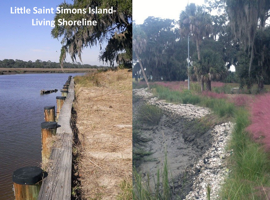 Little St. Simons Living Shoreline