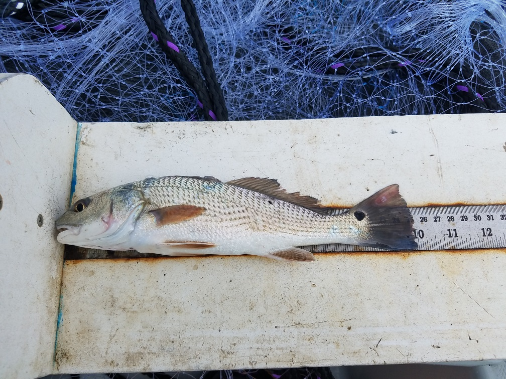 Photo of a red drum on the measuring board