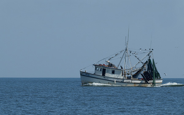 A shrimping boat travels the coast of Georgia.