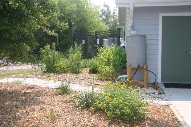 This is a photo of the native garden at the Coastal Resources Headquarters.