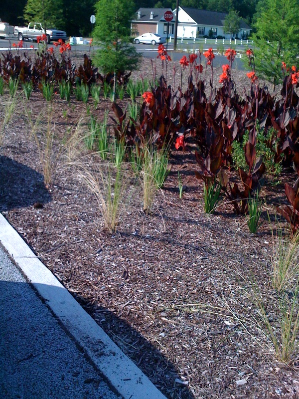 This is a photo of the native plant garden at the Richmond Hill City Center LEED Building.