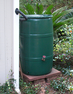 This is a photo of an installed rain barrel.