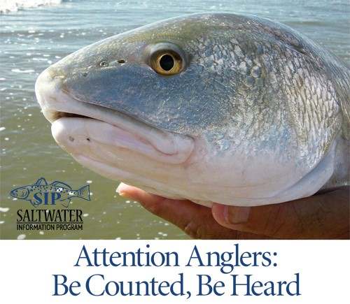 Picture of a red drum and invitation to anglers to be counted and heard by participating in angler surveys.
