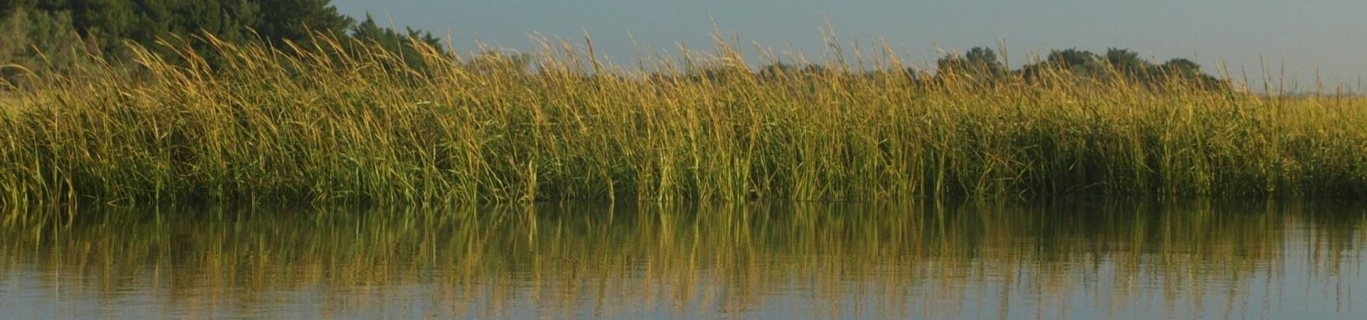 Coastal Georgia Ecosystem Report Card